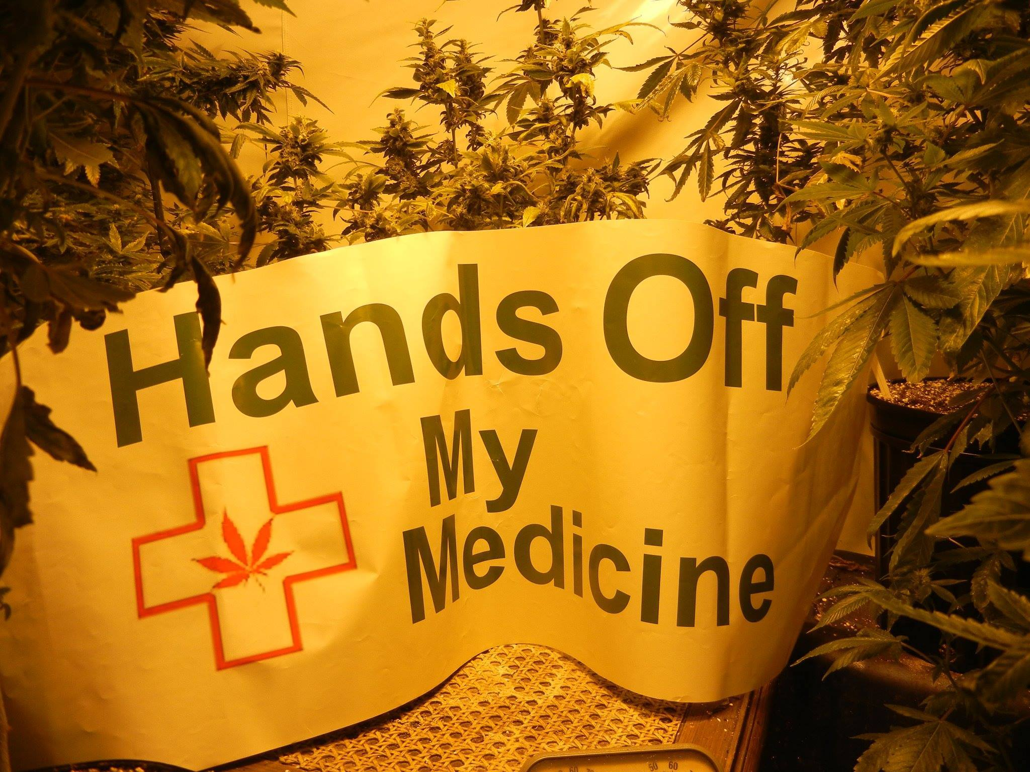 Michigan Medical Marijuana Caregivers & Patients - Index page