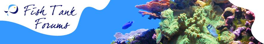 Freshwater & Saltwater Aquarium Forum - Fish Tank Forums